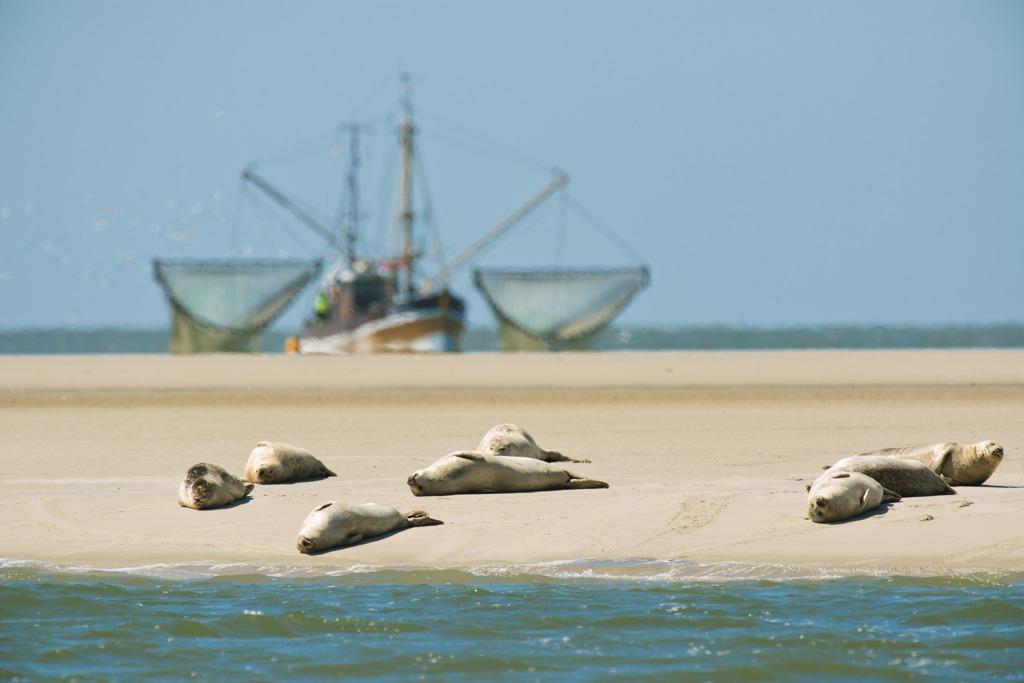 Robben auf der Sandbank