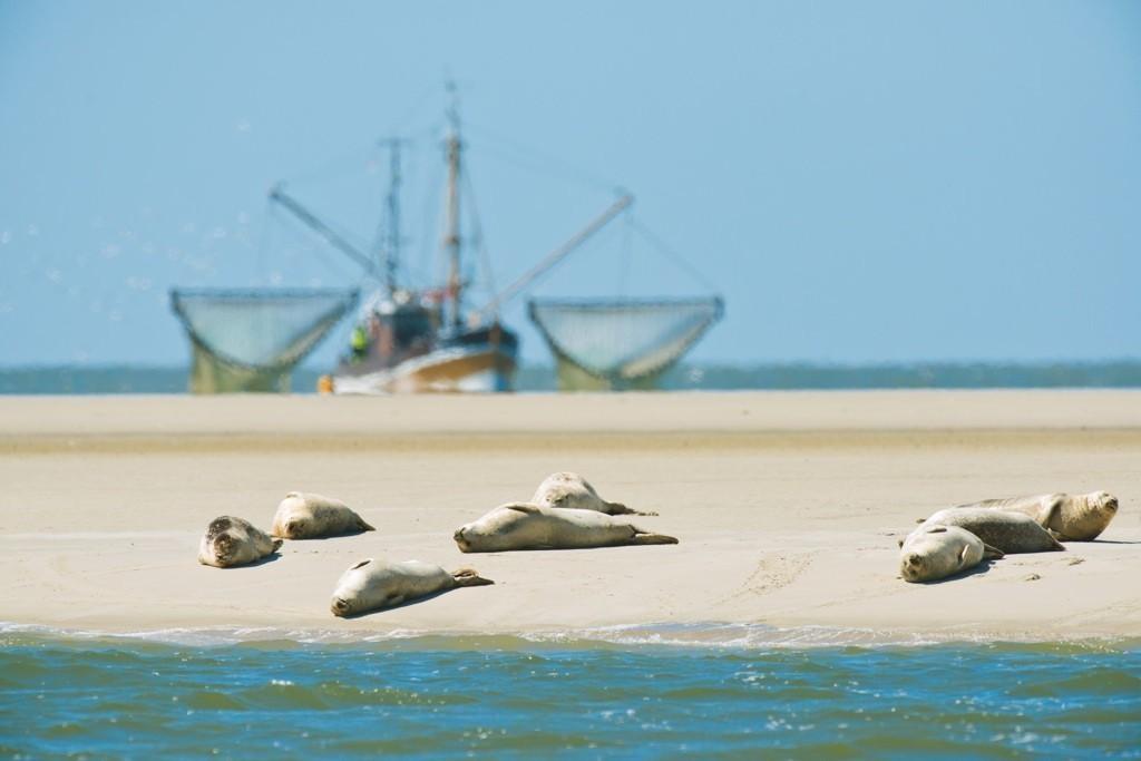 Robben am Wattenmeer