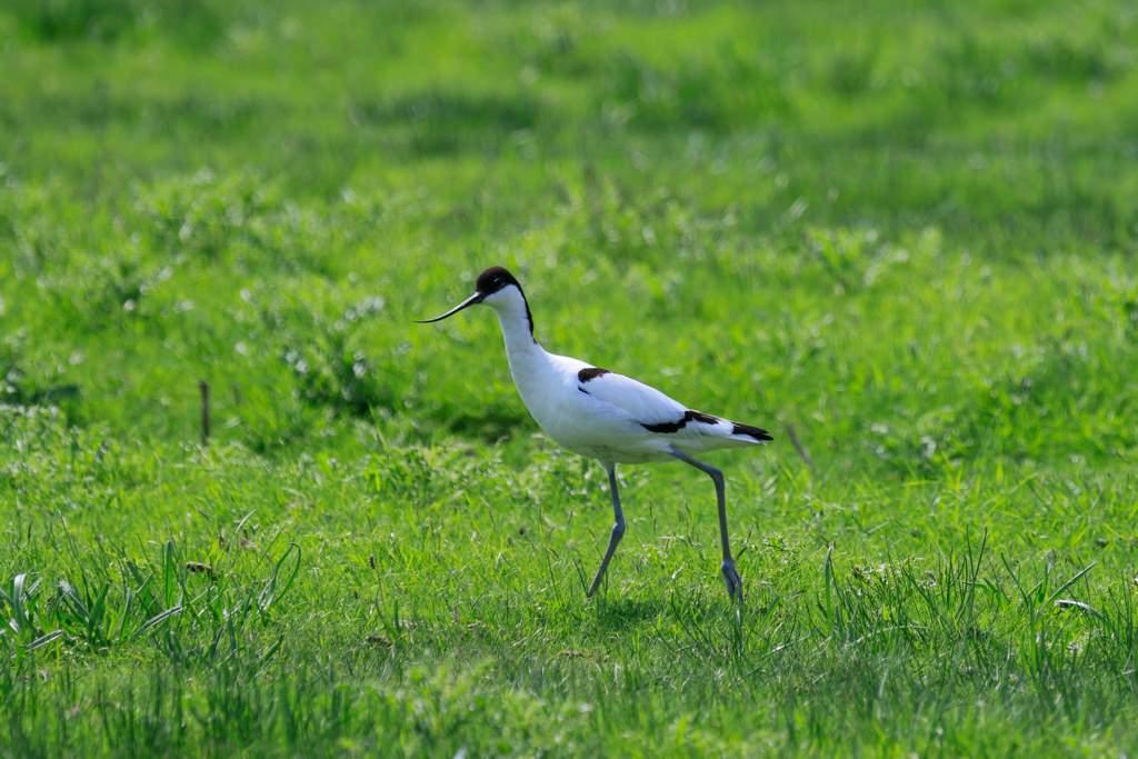 Vogel am Wattenmeer